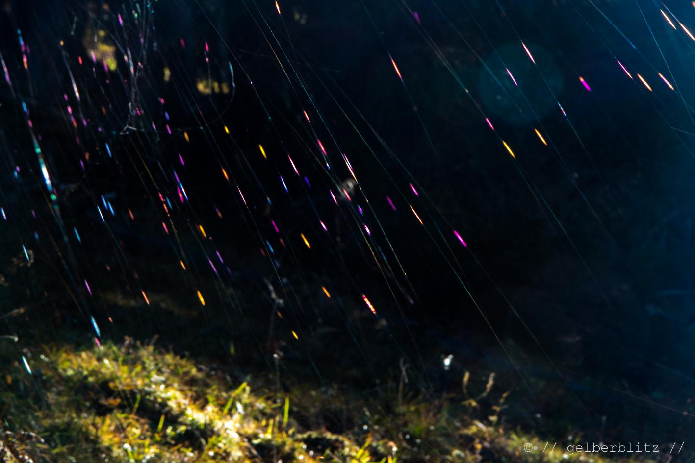 Spinnennetz im Licht
