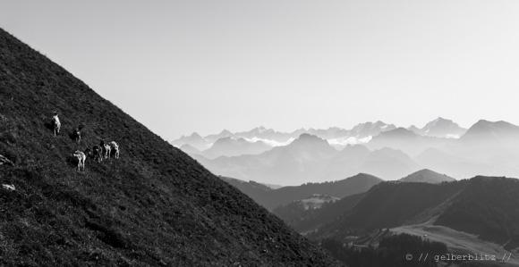 Blick ins Berner Oberland vom Pass aus.